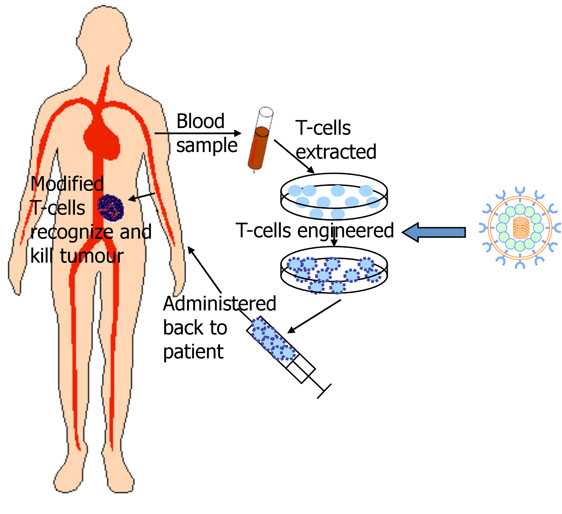 Image result for image of car-t cells